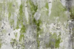 Mold and Respiratory Disease